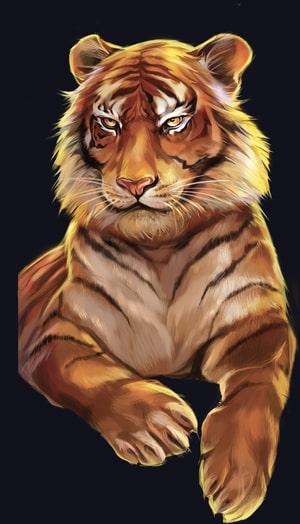 wild cats tigre